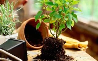 Как приготовить землю для комнатных цветов в домашних условиях?