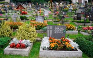 Что можно посадить на могиле многолетнее?