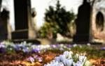 Какой кустарник посадить на кладбище?