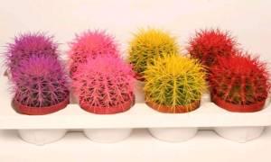Виды кактусов с картинками