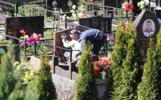 Растения для кладбища многолетники
