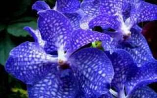 Как ухаживать за подростками орхидеи?