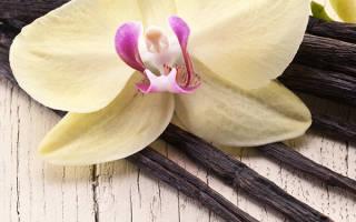 Можно ли ваниль вырастить дома?