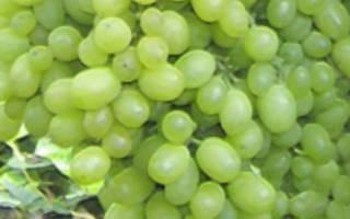 Уход за виноградом алешенькин осенью