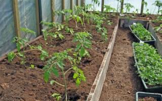 Томаты в теплице выращивание и уход подкормка температура и полив