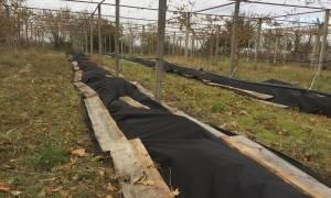 Уход за виноградом осенью в башкирии