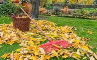 Уход за огородом осенью