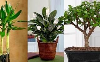 10 комнатных растений которые приносят счастье в дом