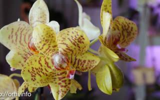 Орхидея после покупки уход в домашних условиях фото