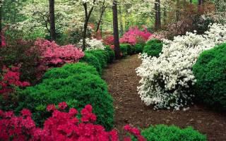 Многолетние деревья и кустарники