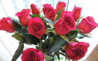 Укоренение роз черенками в домашних условиях