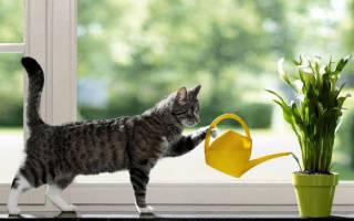 Как оставить домашние цветы на 2 недели без полива?