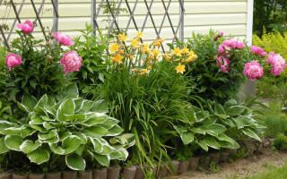 Красивые цветы для дачи многолетние