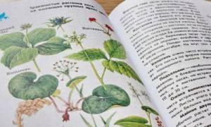 Как узнать название комнатного цветка по внешнему виду?