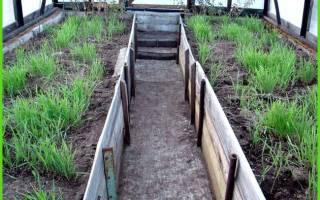 Что дает полив марганцовкой земли в теплице перед посадкой?