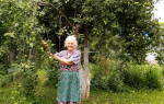 Как обработать плодовые деревья железным купоросом?